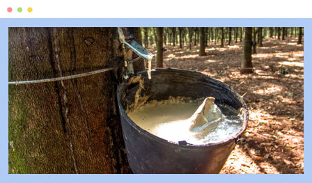 One well-known natural rubber polymer is polyisoprene, or natural rubber from the sap of hevea trees in Central America.